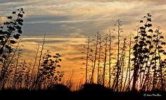 Amanecer entre las pitas del Cabo de Gata  Belleza sobrenatural Places To Visit, Sky, Celestial, Sunset, Beautiful, Outdoor, Supernatural, Cats, Sunrises