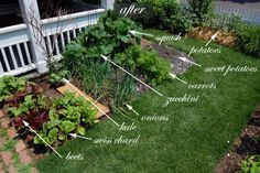 Front Yard Vegetable Garden!One Month Update | The Art of Doing Stuff
