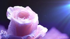 Поздравление с 8 Марта! Видео International Women's Day