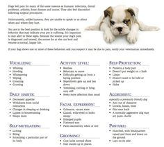 Signs of Pain in Dogs