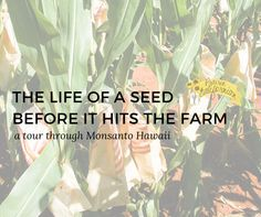 The Life of a Seed Before It Hits the