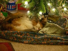 sleeping under the tree♡