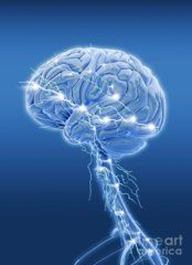 Consciousness Photograph - Brain Activity, Artwork by Science Photo Library