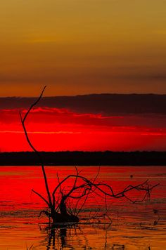 Beautiful sunrise in Danube Delta at Chilia Veche, Romania www.romaniasfriends.com