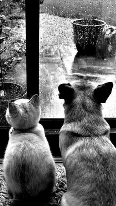 BFFs enjoying a rainy day together while warm and comfy. & BTW - while I love dogs too, I am clearly a cat person. Beautiful Creatures, Animals Beautiful, Cute Animals, I Love Rain, Raining Cats And Dogs, Tier Fotos, Dancing In The Rain, Rainy Days, Rainy Saturday