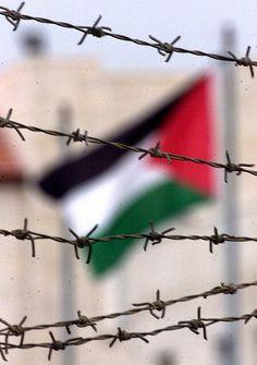 Yes! Free Palestine! #PaLesTine #FreePalestine