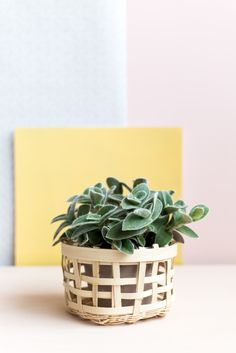 An easy beginner project to start basket weaving and add some beautiful plants…