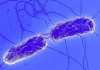 Typhoid fever poor sanitation