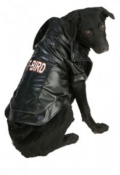 Pet Halloween Costumes, Pet Costumes, Dog Halloween, Cool Costumes, Animal Costumes, Costume Ideas, Happy Halloween, Bird Costume, Bulldog Puppies For Sale