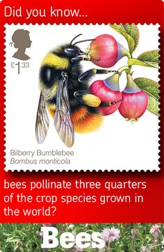 Royal Mail postage stamp from 2015 featuring Bees - this one is of the Bilberry Bumblebee (Bombus monticola) Postage Stamp Design, Postage Stamps, Uk Stamps, Rare Stamps, Uk Bees, Postage Stamp Collection, Bee Art, Save The Bees, Bees Knees