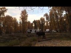 Guest post from Jason Williams – Moose death in the Gros Ventre campground | Teton Photography Group