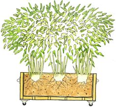 containers for growing bamboo outside | ... the garden. It is the main reason people give for not growing bamboo #PrivacyLandscape