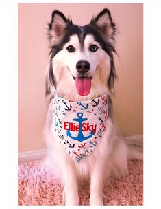 30855fdf9f6a Precious Paw Prints Boutique · Personalized Dog Bandanas · Shout out to  adorable Ellie in our Anchors Away Personalized Dog Bandana ❤ ⚓️