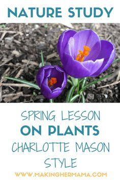 CM Spring Nature Stu