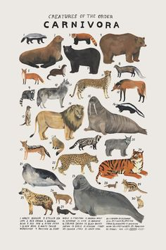 Kelsey Oseid - Playful Watercolors Illustrate the Many Classifications of the Animal Kingdom