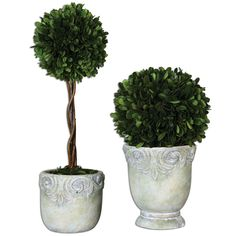 Preserved, Natural Boxwood Foliage Potted In Stone Finished, Ceramic Planters. Tall Topiary Has Natural Willow Branches.