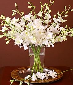 Dendrobium Orchids make for great DIY wedding flowers. They are easy to care for, easy to arrange and produce fantastic results when simply arranged in a clear glass vase! Summer Wedding Centerpieces, Simple Wedding Bouquets, Orchid Centerpieces, Wedding Flower Decorations, White Wedding Flowers, Wedding Flower Arrangements, White Flowers, Beautiful Flowers, Wedding Ideas