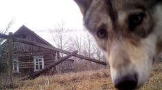 Resultado de imagen para chernobyl