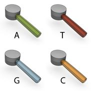 DNA Is a Structure That Encodes Biological Information | Learn Science at Scitable