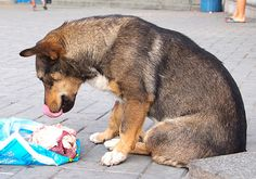 Raw food diets for dogs | Adopt small dogAdopt Small Dog