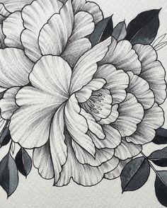 Peony flower art print of pen illustration flower drawing fl Flower Sketches, Drawing Sketches, Art Drawings, Drawing Art, Peony Drawing, Zealand Tattoo, Illustration Blume, Zentangle Drawings, Pen Art