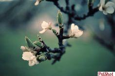 Life begins | Muguri de primavara - PxlShot.ro