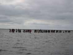 Event Organization, More Fun, Netherlands, Amsterdam, Adventure, Beach, Water, Outdoor, The Nederlands