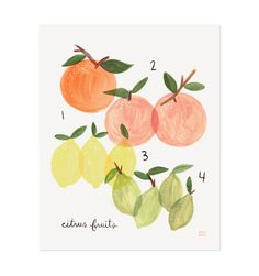 Citrus Illustrated Art Print by Rafle Paper Co