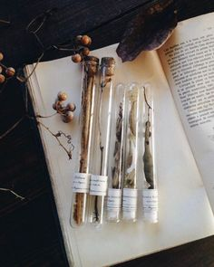 Test tubes with dried flowers, seed pods, leaves etc Wicca, Elf Rogue, Herbal Magic, Nature Table, Witch Aesthetic, Nature Journal, Nature Study, Arte Floral, Dried Flowers
