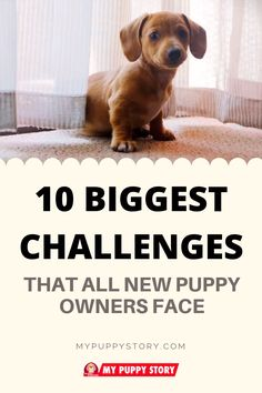 10 Biggest Challenges That All New Puppy Owners Face When it comes to owning a puppy, one of the most significant aspects of the process of raising it is to train it. Not only is this fun and allows y Puppy Training Tips, Training Your Dog, Training Pads, Agility Training, Brain Training, Training Equipment, Dog Crate Training, Potty Training Puppies, Kennel Training A Puppy