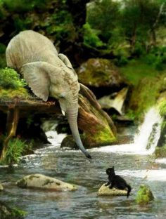 """""""A Heart that reaches out with Love, can heal a Soul and change a Life."""" The Lord has been highlighting Elephants to me for some reason? I am enjoying seeking it out.:)"""