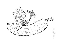 Cucumber with leaves vegetables coloring pages for kids printable free Kids Printable Coloring Pages, Food Coloring Pages, Mandala Coloring Pages, Coloring Pages For Kids, Coloring Books, Vegetable Coloring Pages, Vegetable Pictures, Vegetable Design, Silhouette Pictures