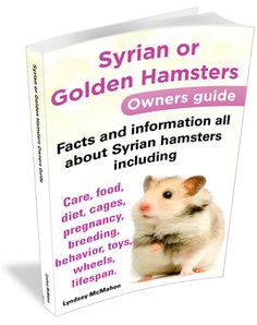Syrian and Golden Hamsters