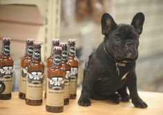Brewery creates Bottom Sniffer craft beer for dogs