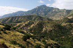 Rincon Peak from the Turkey Creek Trail, Rincon Mountains, AZ
