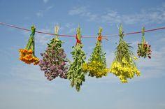 Naturvölker wussten es schon immer: Pflanzen sind wichtige Helfer für unsere Gesundheit. Es gibt sogar Heilpflanzen, die uns im alltäglichen Stress unterstützen können. Wir stellen drei davon vor.