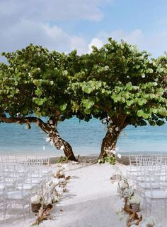 for beach weddings, find a tree, decorate it with your beach wedding decorations and tada! You get a beautiful and awesome wedding beach altar Simple Beach Wedding, Seaside Wedding, Nautical Wedding, Beach Weddings, Destination Weddings, Beach Wedding Inspiration, Wedding Ideas, Wedding Details, Wedding Abroad