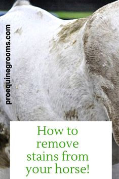 How to deal with manure stains on your horse! TIps for removing small (and large) manure stains from your horse! You will need a little elbow grease, some hot water maybe, and a no rinse shampoo or spot remover for horses.