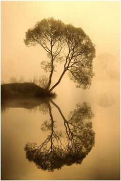 Reflection and its tree