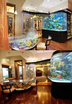 I wouldn't want this in my house, but it would be amazing to see in person. of you can always just go to an aquarium. Aquarium Mural, Home Aquarium, Aquarium Design, Aquarium Ideas, Saltwater Tank, Saltwater Aquarium, Aquarium Fish Tank, Future House, My House