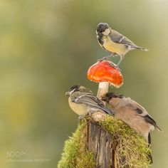 wants the same by geertweggen #animals #animal #pet #pets #animales #animallovers #photooftheday #amazing #picoftheday