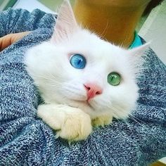 Alos The Cat Has The Most Hypnotizing Eyes - We Love Cats and Kittens