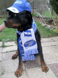 Dogs with attitude HC Kometa Brno Ice Hockey, Attitude, Dogs, Life, Pet Dogs, Doggies, Hockey Puck, Hockey