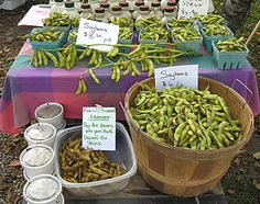 Growing Soybeans for the Farmers Market