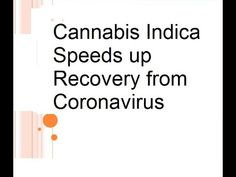 Cannabis Indica Speeds up Recovery from Coronavirus Severe acute respiratory syndrome (SARS) is a viral respiratory disease caused by the SARS coronavirus (S. Cannabis Plant, Cannabis Oil, Augmentation, Ignorant, Actuel, Medical Marijuana, Immune System, Professor