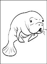 manatee coloring page coloring pages