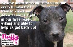 #shawpbr #adopt
