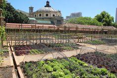VOC-Vegetable Garden-Cape Town