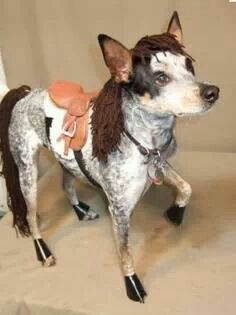 That's just too cute. A Heeler Horse!
