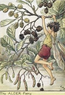 Cicely Mary Barker | The Alder Fairy